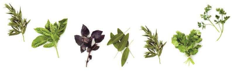 Health & Herbs - a wholesale supplier of dried raw cut herbs